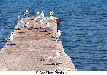 Some seagulls on concrete dock on the sea