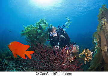 Scuba Diver and Gorgonian Coral - A diver discovers...