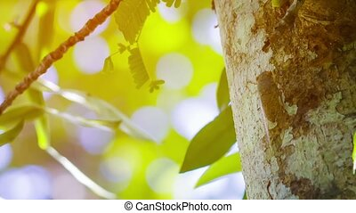 Close-up Shot of a Cicada Camouflaged with Tree Bark -...