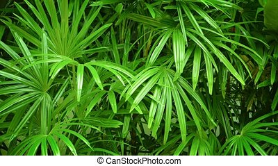 Beautiful Green Plants with Fronds in Southeast Asia -...