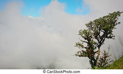 Gnarled Tree on a Mountainside above the Cloud Line - Video...