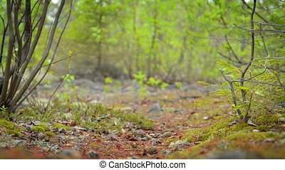 Low Angle of Hiker in Northern Forest in Russia - Video...