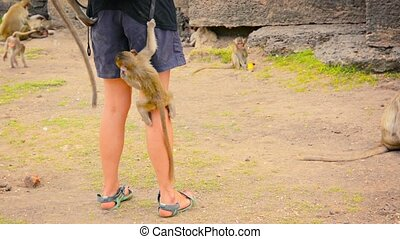 Monkeys Climbing a Tourist to Steal Food