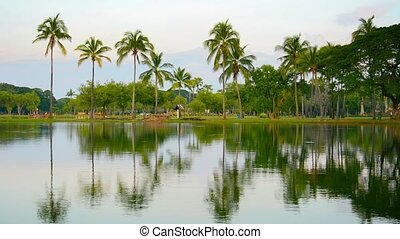 Palm Trees Reflected in a Pond in Southeast Asia - 1920x1080...