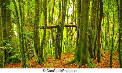 Mossy Tree Trunks in Jungle near Chiang Mai, Thailand -...