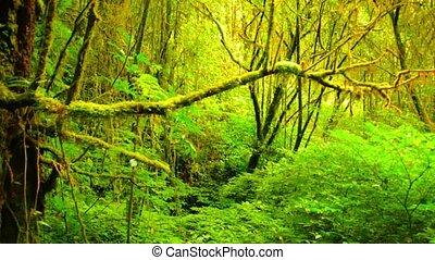 Pristine, Jungle Wilderness near Chiang Mai, Thailand -...
