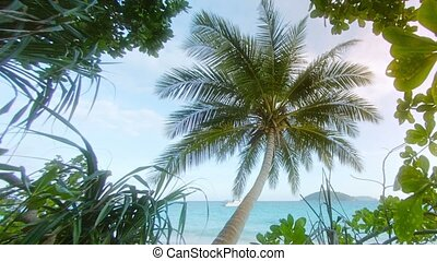 Tropical trees and coconut palm on the ocean coast Thailand,...