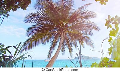 Coconut Palm Overlooking a Tropical Beach in Thailand -...