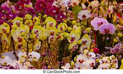 Beautiful, Potted Orchids, Swaying in a Light Breeze - Video...