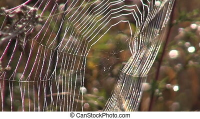 Spider web in the autumn - Spider web in the autumnal...