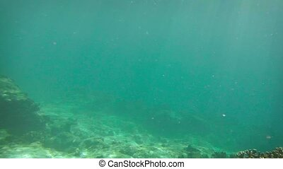 Snorkelling Tourist Dives to Shallow Reef Bottom - Video...