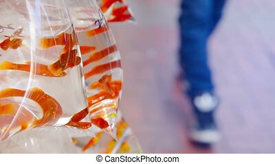Orange Mollies for Sale at a Streetside Vendors Stand -...