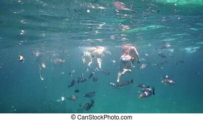 Submerged View of Tourists Swimming with Tropical Fish -...