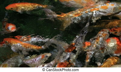 Beautifully decorated artificial pond with Koi - Beautifully...