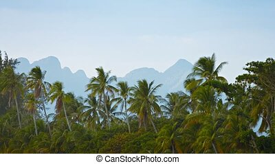 Wild Coconut Palms in a Southeast Asian Wilderness Area -...