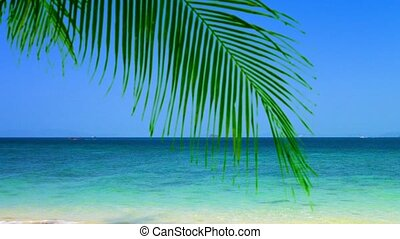 Bold Blue Horizon over a Tropical Beach - FullHD video - The...