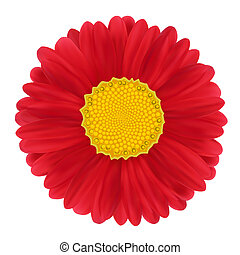 Red Gerbera, flower. illustration image