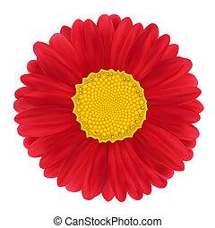 Red Gerbera, flower. illustration image