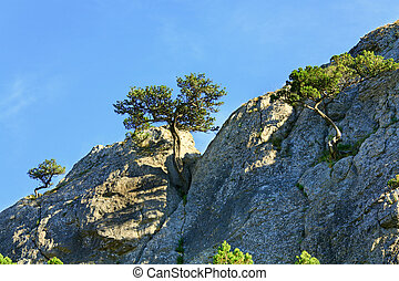 rock with juniper trees on sky background - rock with...