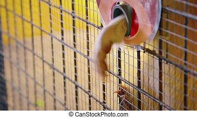 Adorable Raccoon Reaches for Peanuts from Inside his Cage -...