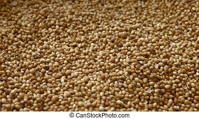 Coriander Seeds for Sale in Bulk at Public Market - Big pile...