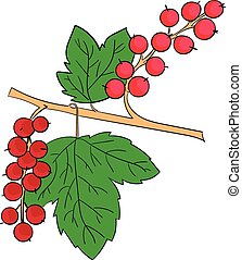 Currants plant fruits - Currants berries doodle hand drawn...