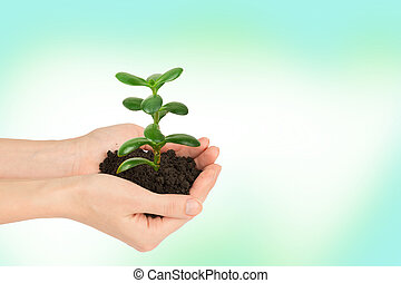 Womans hands holding plant
