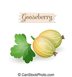 bright gooseberry plums - Vector illustration bright...