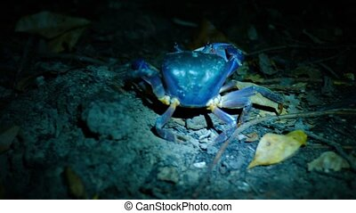Terrestrial Crab Walking on the Sand at Night