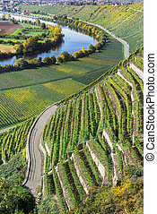 Vineyards at the Neckar - Steep vineyards in the sunny...