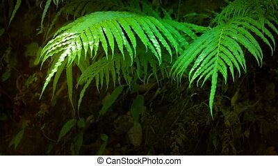 Delicate Fern Leaves Fluttering in the Mild Breeze