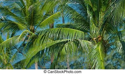 Cluster of Palm Trees, Swaying in a Breeze in Thailand