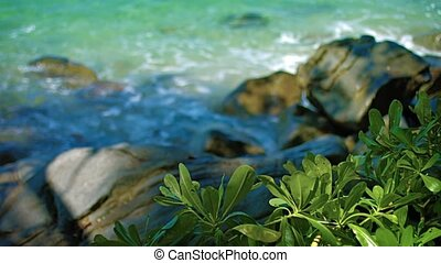 Green, Leafy Plants Growing Wild along Tropical, Thai Beach...