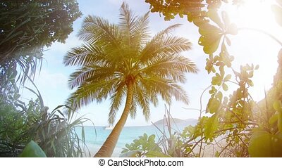 Solitary Coconut Palm near the Beach in Southern Thailand -...