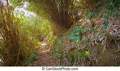 Tourist hiking along a nature trail in southern Thailand