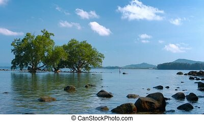 Lone Tourists Wades amongst Mangrove Trees in Southeast Asia...
