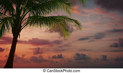 Tropical Palm Tree Backlit against a Sunset Sky - FullHD...