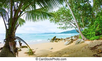 Tree Branches Swaying in Breeze on Tropical Beach - Video...