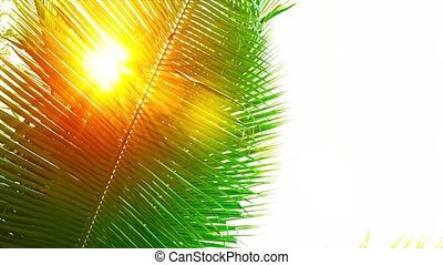 Golden Sun Shining through a Palm Leaf - FullHD video - Rays...
