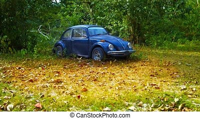 Old Beetle Car Abandoned in the High Grass