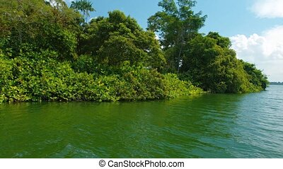 Heavy Vegetation Covers the Bank of a Broad River - Camera...