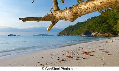 Gnarled Tree Branch Hanging over a Tropical Beach - Gnarled...