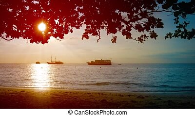 Late Afternoon Sun throught the Trees on a Tropical Beach -...