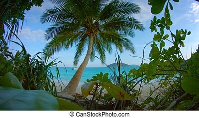 Tropical Beach from Behind Native Flora - Bold, blue...