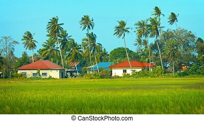 Modern Houses amongst Rice Fields and Coconut Trees - Video...