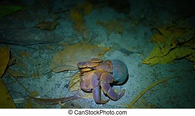Hermit Crab Crawling over the Sand at Night - video FullHD -...