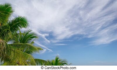 Partly Cloudy Tropical Sky with Palm Trees - Video 1080p -...