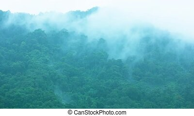Fog and clouds on a hillside with a tropical forest. The rainy season in Asia.