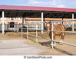 圍場, 馬