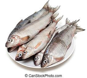 pescado blanco, fresco, pez, placa